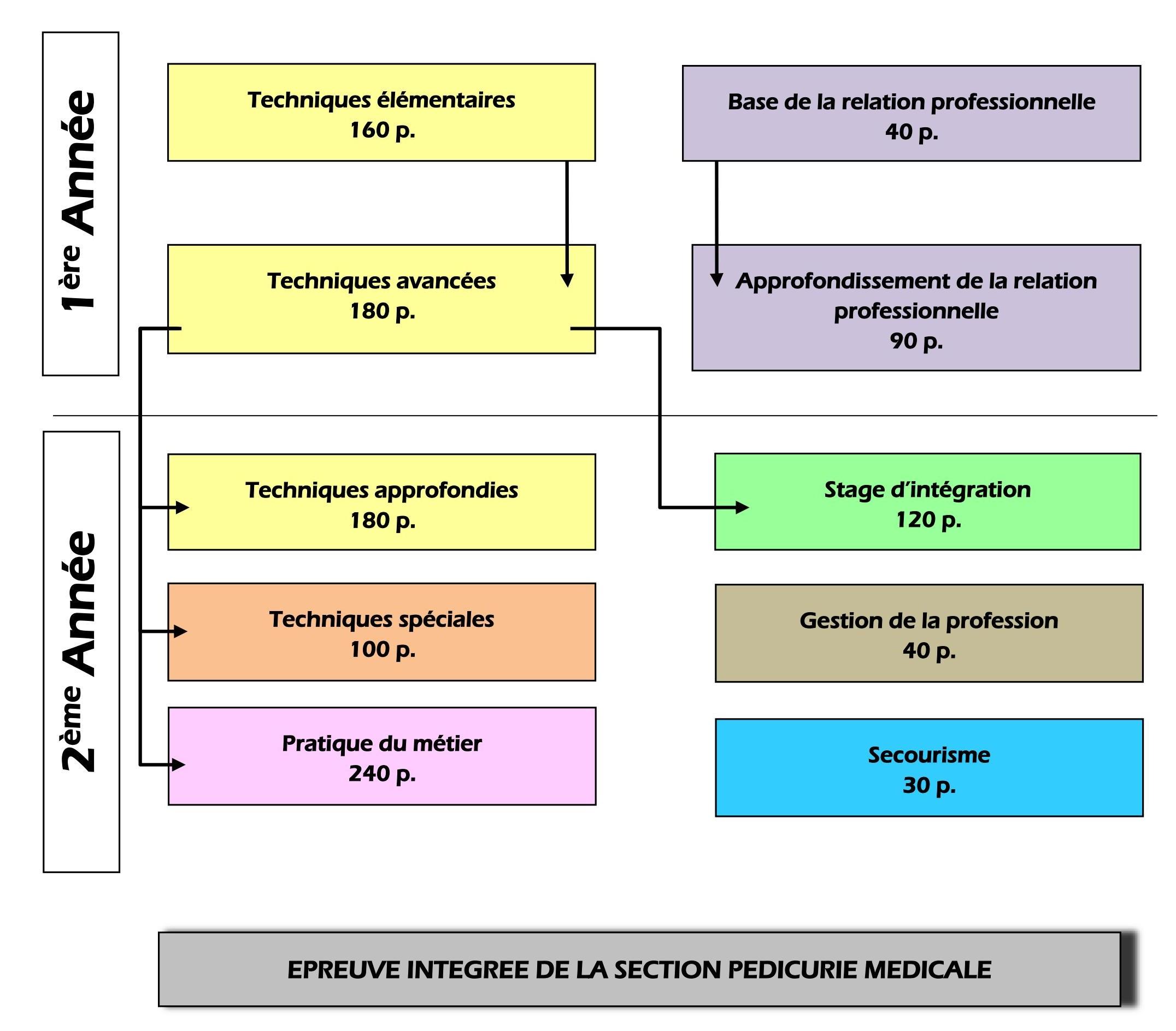 Pédicure spécialisé – Organigramme de la section